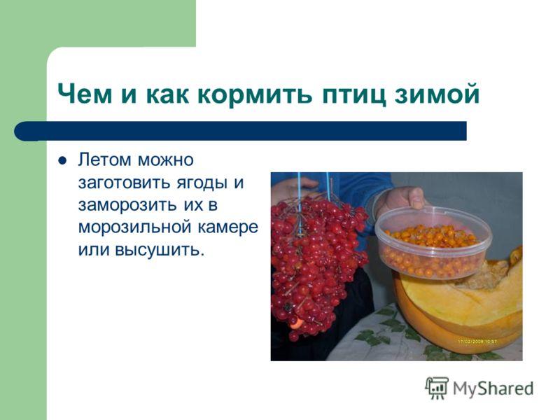 Чем и как кормить птиц зимой Летом можно заготовить ягоды и заморозить их в морозильной камере или высушить.