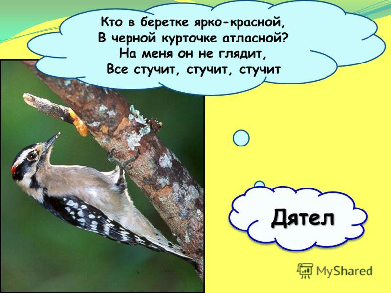 Поползень По дереву вниз головой! Бежит в одежде голубой…