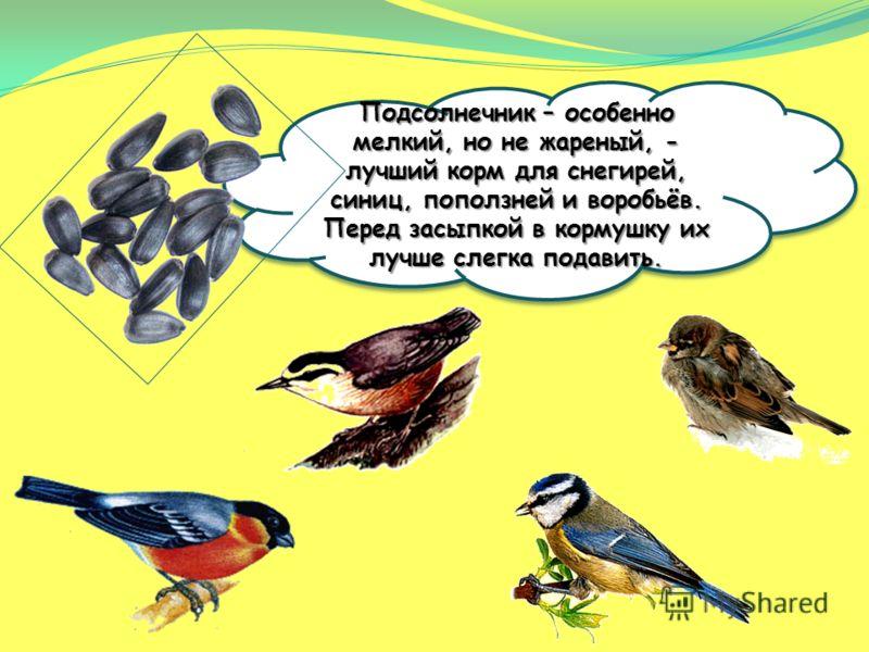 Кусочки сала годятся не всем птицам. Сало любят синички. Только сало не должно быть солёным. Овёс охотно съедят синицы и воробьи.