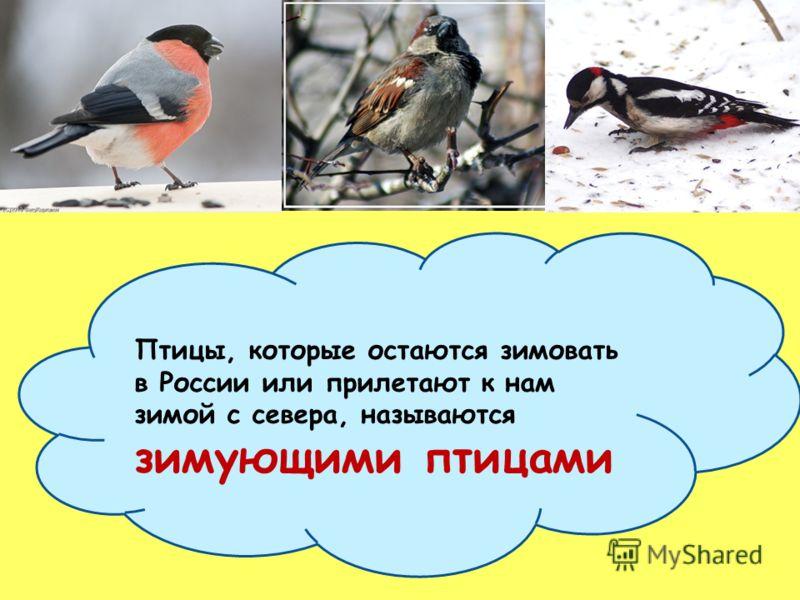 Осенью многие птицы покидают свои родные места и летят зимовать на юг. Зимой под снегом и льдом они не могут найти себе пищу, поэтому не холод, а голод заставляет их отправится в дальнее путешествие. Осенью многие птицы покидают свои родные места и л