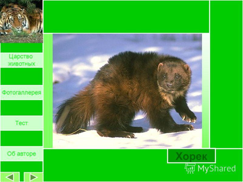 Собака Об авторе Царство животных Фотогаллерея Тест
