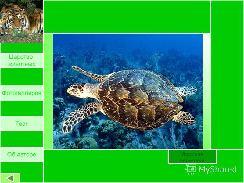 Хорек Об авторе Царство животных Фотогаллерея Тест