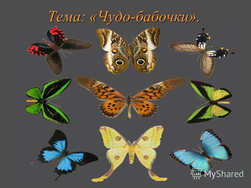 Тема: «Чудо-бабочки».