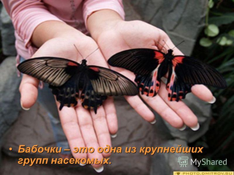 Бабочки – это одна из крупнейших групп насекомых.Бабочки – это одна из крупнейших групп насекомых.
