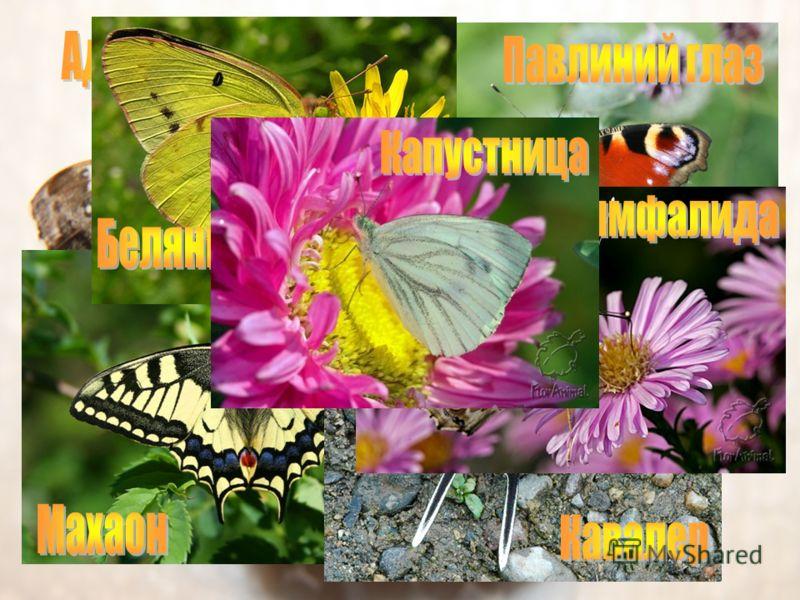 Существует более 200 тыс. видов бабочек