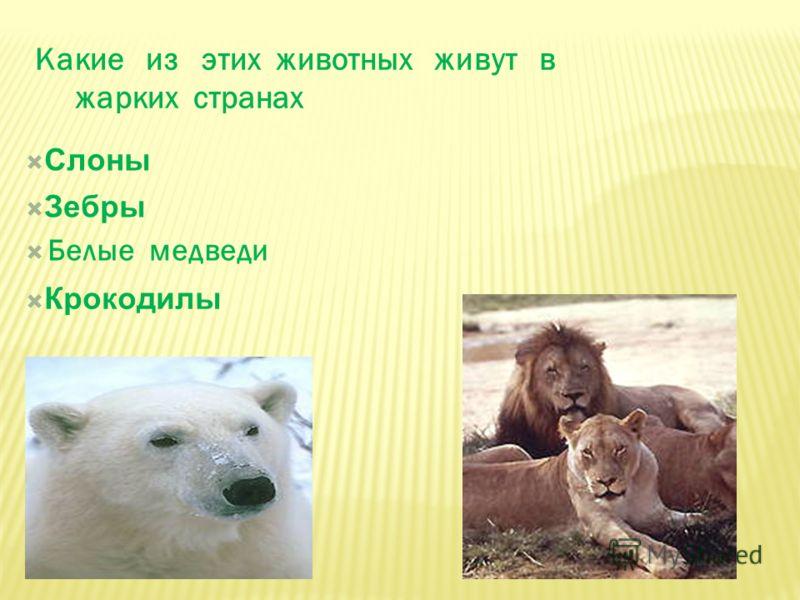 Какие из этих животных живут в жарких странах Белые медведи Слоны Зебры Крокодилы