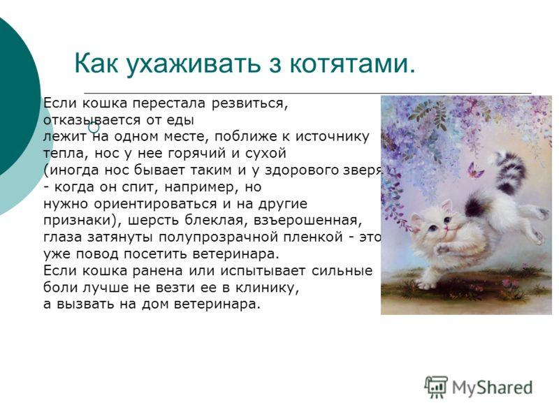 Как ухаживать з котятами. Если кошка перестала резвиться, отказывается от еды лежит на одном месте, поближе к источнику тепла, нос у нее горячий и сухой (иногда нос бывает таким и у здорового зверя - когда он спит, например, но нужно ориентироваться