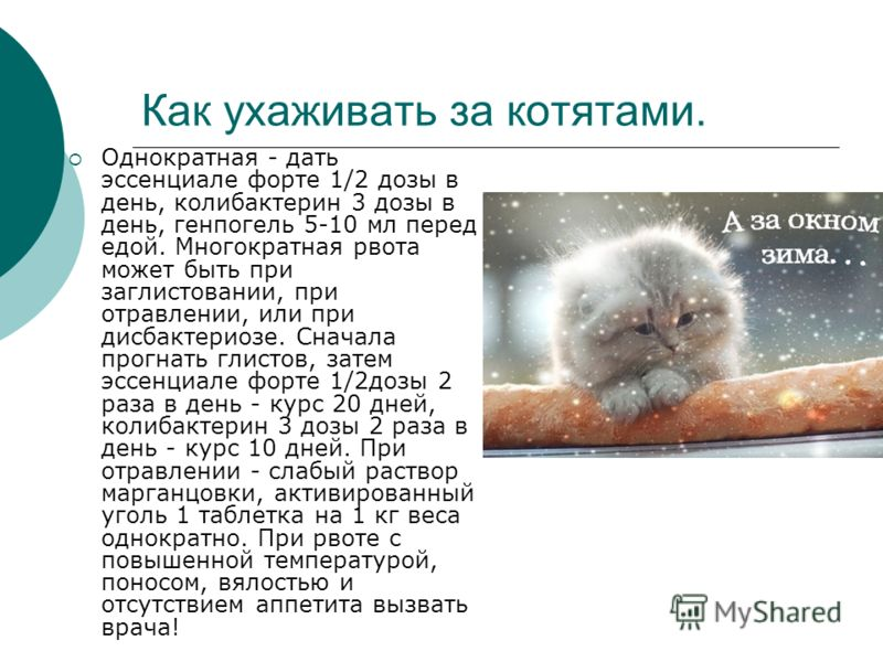 Как ухаживать за котятами. Однократная - дать эссенциале форте 1/2 дозы в день, колибактерин 3 дозы в день, генпогель 5-10 мл перед едой. Многократная рвота может быть при заглистовании, при отравлении, или при дисбактериозе. Сначала прогнать глистов