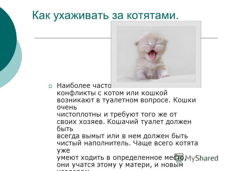 Как ухаживать за котятами. Наиболее часто конфликты с котом или кошкой возникают в туалетном вопросе. Кошки очень чистоплотны и требуют того же от своих хозяев. Кошачий туалет должен быть всегда вымыт или в нем должен быть чистый наполнитель. Чаще вс