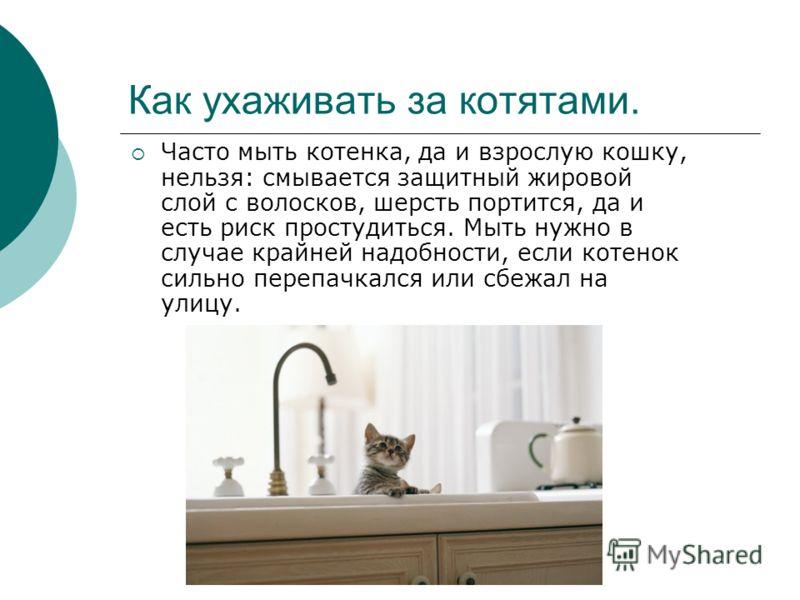 Как ухаживать за котятами. Часто мыть котенка, да и взрослую кошку, нельзя: смывается защитный жировой слой с волосков, шерсть портится, да и есть риск простудиться. Мыть нужно в случае крайней надобности, если котенок сильно перепачкался или сбежал