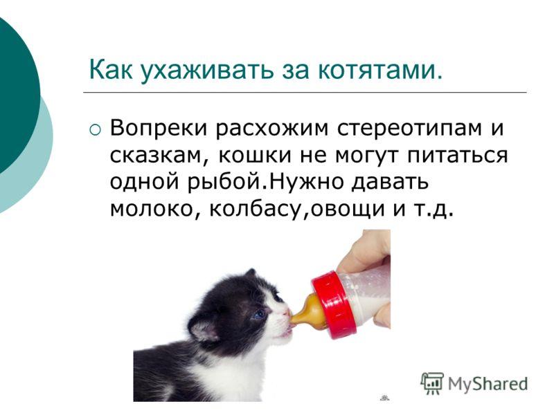 Как ухаживать за котятами. Вопреки расхожим стереотипам и сказкам, кошки не могут питаться одной рыбой.Нужно давать молоко, колбасу,овощи и т.д.