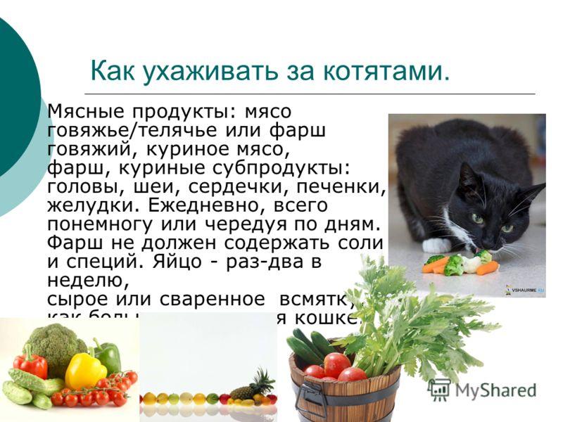 Как ухаживать за котятами. Мясные продукты: мясо говяжье/телячье или фарш говяжий, куриное мясо, фарш, куриные субпродукты: головы, шеи, сердечки, печенки, желудки. Ежедневно, всего понемногу или чередуя по дням. Фарш не должен содержать соли и специ