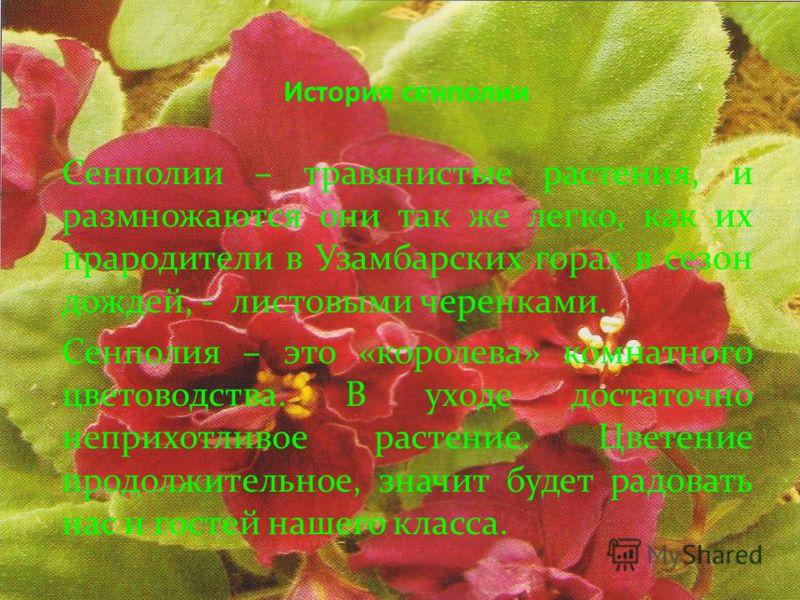 История сенполии Сенполии – травянистые растения, и размножаются они так же легко, как их прародители в Узамбарских горах в сезон дождей, - листовыми черенками. Сенполия – это «королева» комнатного цветоводства. В уходе достаточно неприхотливое расте