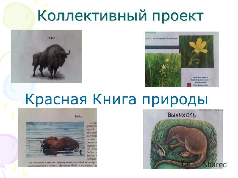 Коллективный проект Красная Книга природы