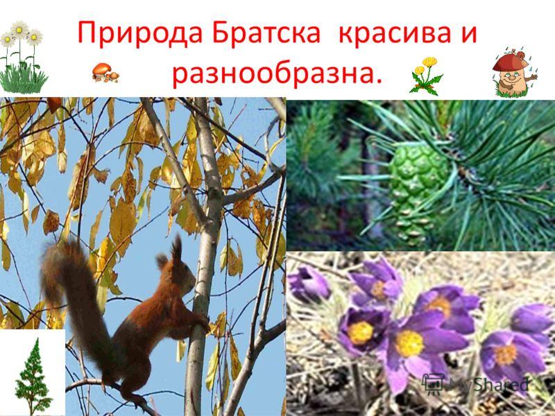 Природа Братска красива и разнообразна.