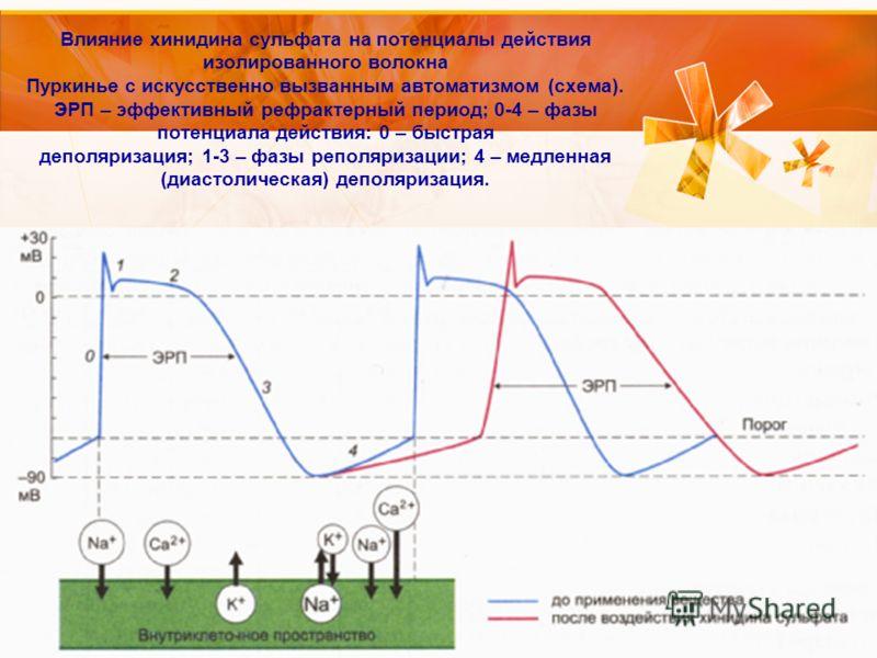 Влияние хинидина сульфата на потенциалы действия изолированного волокна Пуркинье с искусственно вызванным автоматизмом (схема). ЭРП – эффективный рефрактерный период; 0-4 – фазы потенциала действия: 0 – быстрая деполяризация; 1-3 – фазы реполяризации