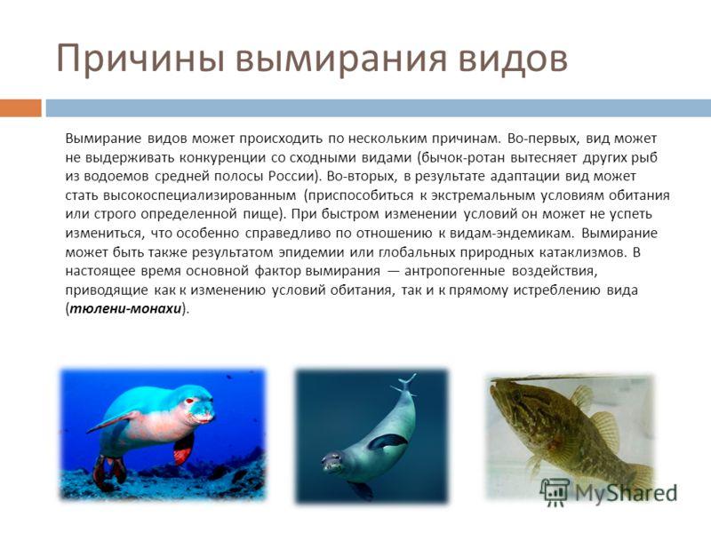 Причины вымирания видов Вымирание видов может происходить по нескольким причинам. Во - первых, вид может не выдерживать конкуренции со сходными видами ( бычок - ротан вытесняет других рыб из водоемов средней полосы России ). Во - вторых, в результате