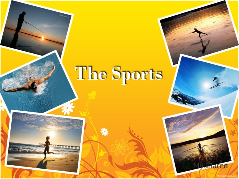 The Sports