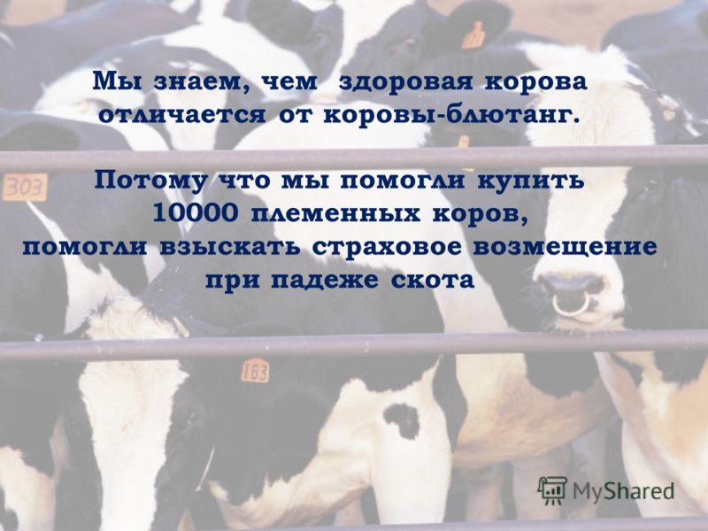 Мы знаем, чем здоровая корова отличается от коровы-блютанг. Потому что мы помогли купить 10000 племенных коров, помогли взыскать страховое возмещение при падеже скота