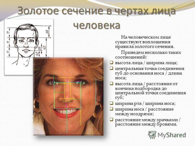 Золотое сечение в чертах лица человека На человеческом лице существуют воплощения правила золотого сечения. Приведем несколько таких соотношений: высота лица / ширина лица; центральная точка соединения губ до основания носа / длина носа; высота лица