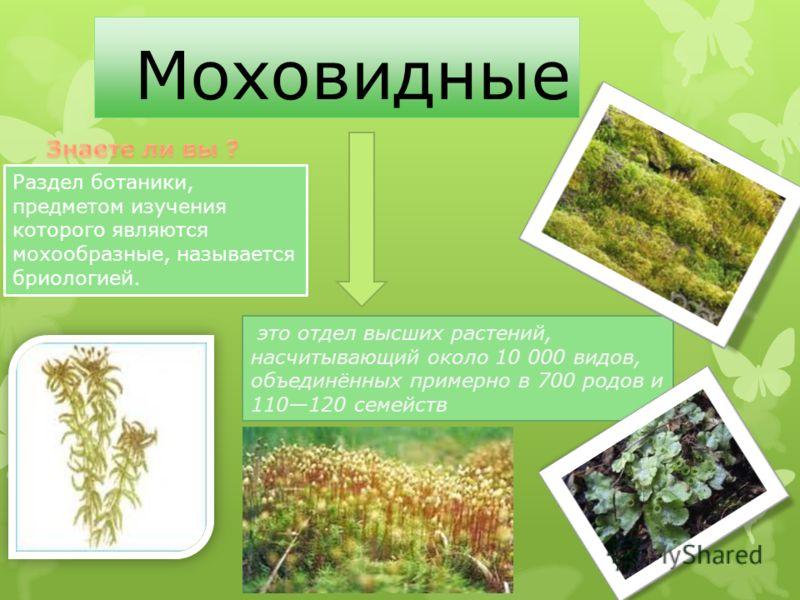 Моховидные это отдел высших растений, насчитывающий около 10 000 видов, объединённых примерно в 700 родов и 110120 семейств Раздел ботаники, предметом изучения которого являются мохообразные, называется бриологией.