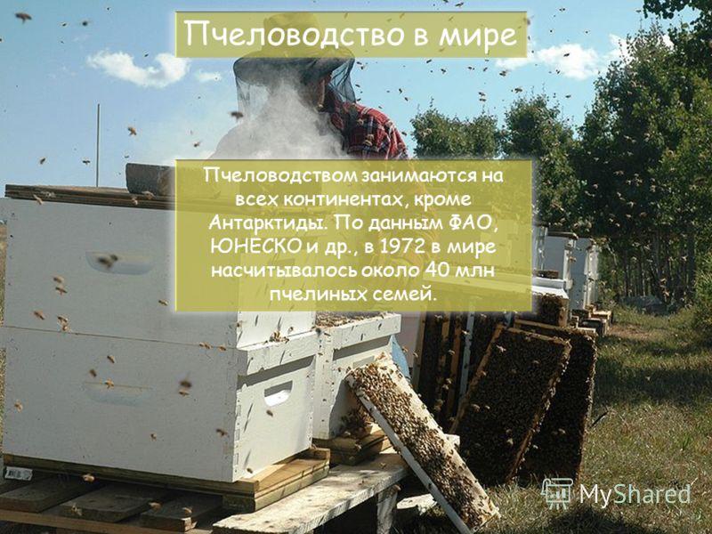 Пчеловодство в мире Пчеловодством занимаются на всех континентах, кроме Антарктиды. По данным ФАО, ЮНЕСКО и др., в 1972 в мире насчитывалось около 40 млн пчелиных семей.