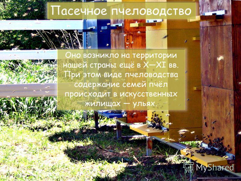 Пасечное пчеловодство Оно возникло на территории нашей страны ещё в XXI вв. При этом виде пчеловодства содержание семей пчёл происходит в искусственных жилищах ульях.