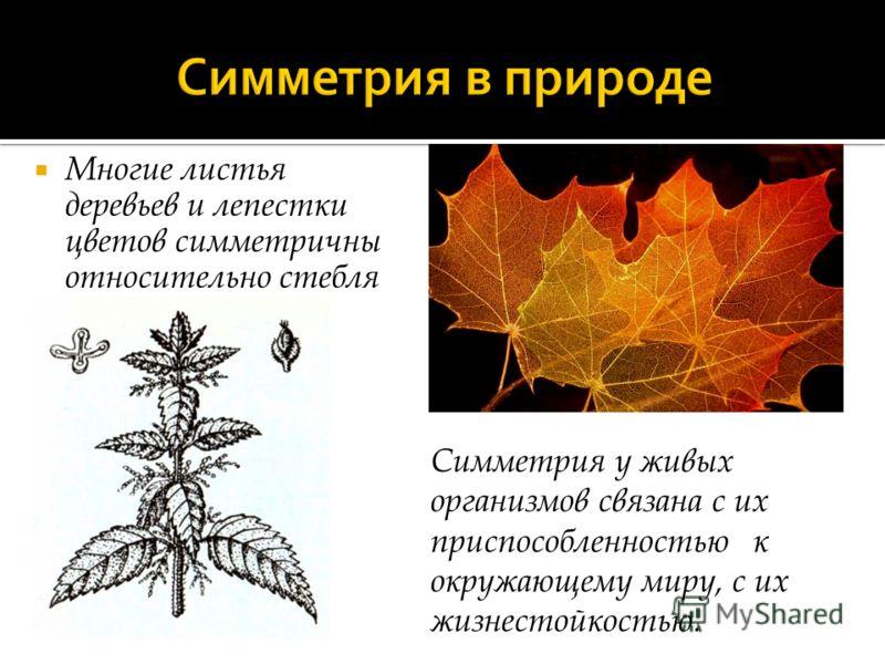 Многие листья деревьев и лепестки цветов симметричны относительно стебля Симметрия у живых организмов связана с их приспособленностью к окружающему миру, с их жизнестойкостью.
