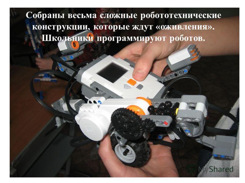 Собраны весьма сложные робототехнические конструкции, которые ждут «оживления». Школьники программируют роботов.