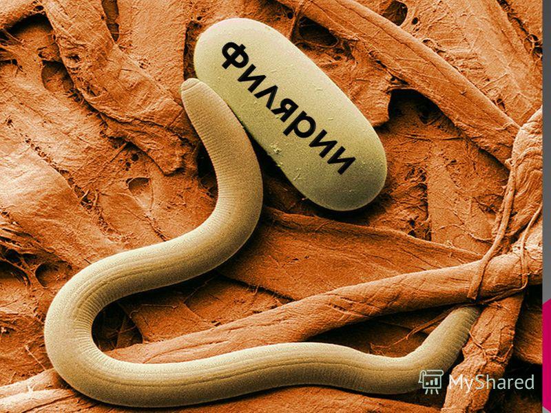 паразиты методы лечения