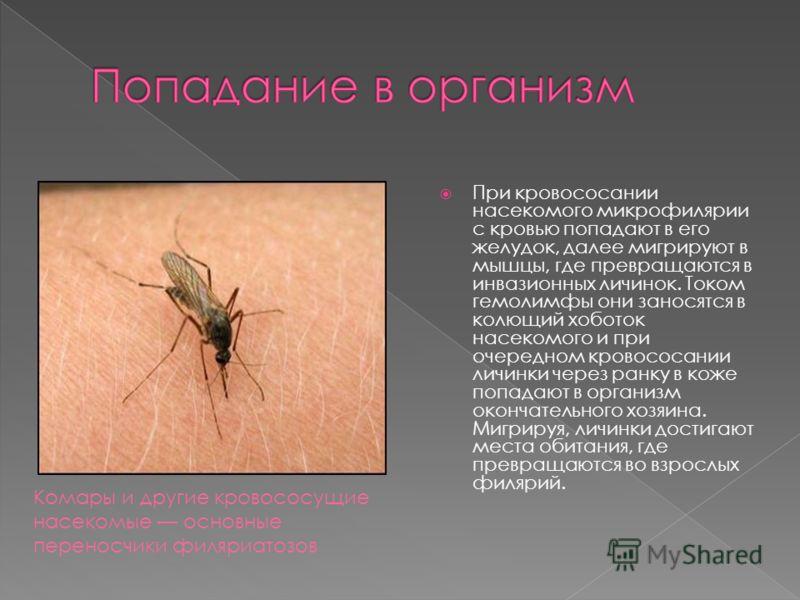 При кровососании насекомого микрофилярии с кровью попадают в его желудок, далее мигрируют в мышцы, где превращаются в инвазионных личинок. Током гемолимфы они заносятся в колющий хоботок насекомого и при очередном кровососании личинки через ранку в к