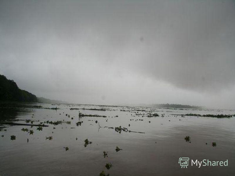 КЛИМАТ Амазонская низменность, где в основном протекает река, лежит в области экваториального и субэкваториального климата. Тем- пература весь год 24-28°С, осадков выпадает 2000-3500 мм. в год. Но режим осадков различен. На западе Амазонии- экватори