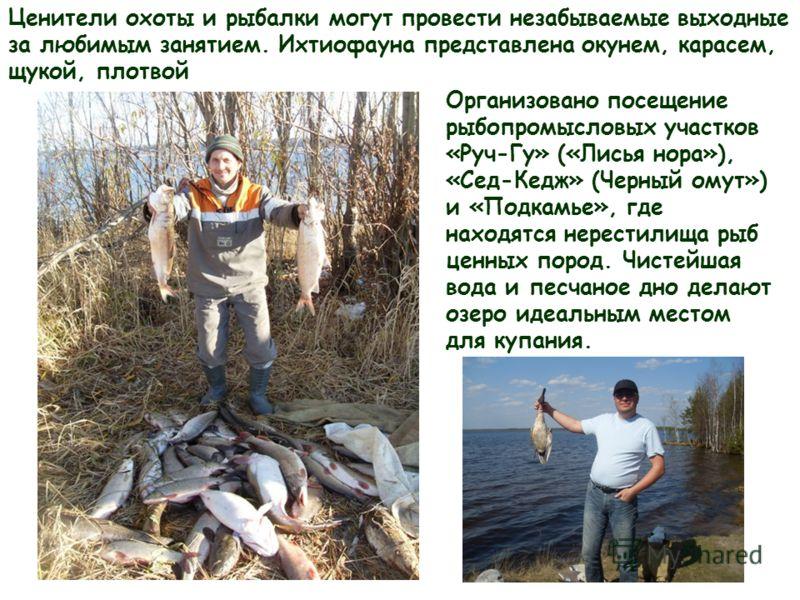Ценители охоты и рыбалки могут провести незабываемые выходные за любимым занятием. Ихтиофауна представлена окунем, карасем, щукой, плотвой Организовано посещение рыбопромысловых участков «Руч-Гу» («Лисья нора»), «Сед-Кедж» (Черный омут») и «Подкамье»