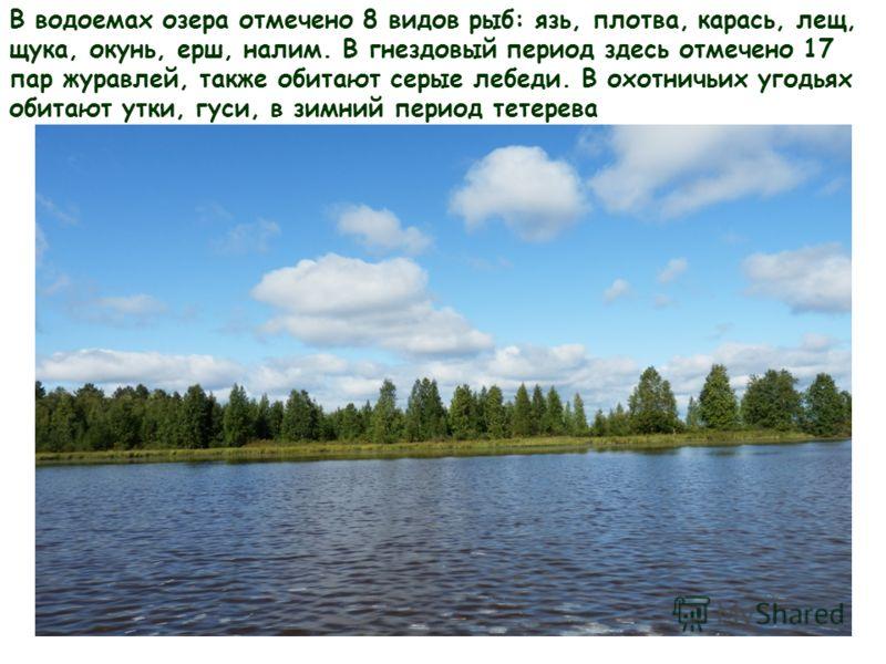 В водоемах озера отмечено 8 видов рыб: язь, плотва, карась, лещ, щука, окунь, ерш, налим. В гнездовый период здесь отмечено 17 пар журавлей, также обитают серые лебеди. В охотничьих угодьях обитают утки, гуси, в зимний период тетерева