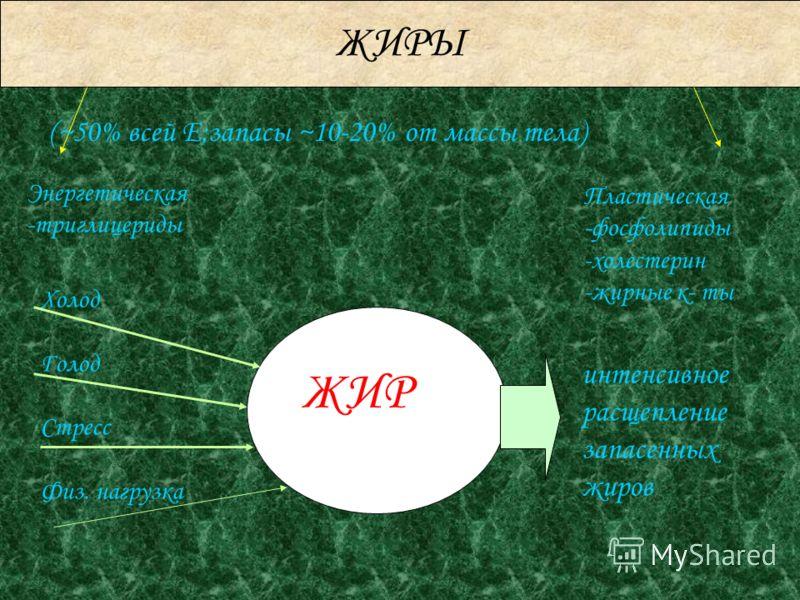 ЖИРЫ Энергетическая -триглицериды Пластическая -фосфолипиды -холестерин -жирные к- ты (~50% всей Е;запасы ~10-20% от массы тела) ЖИР Холод Голод Стресс Физ. нагрузка интенсивное расщепление запасенных жиров