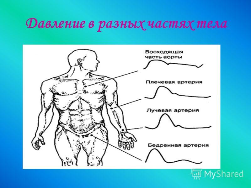 Давление в разных частях тела