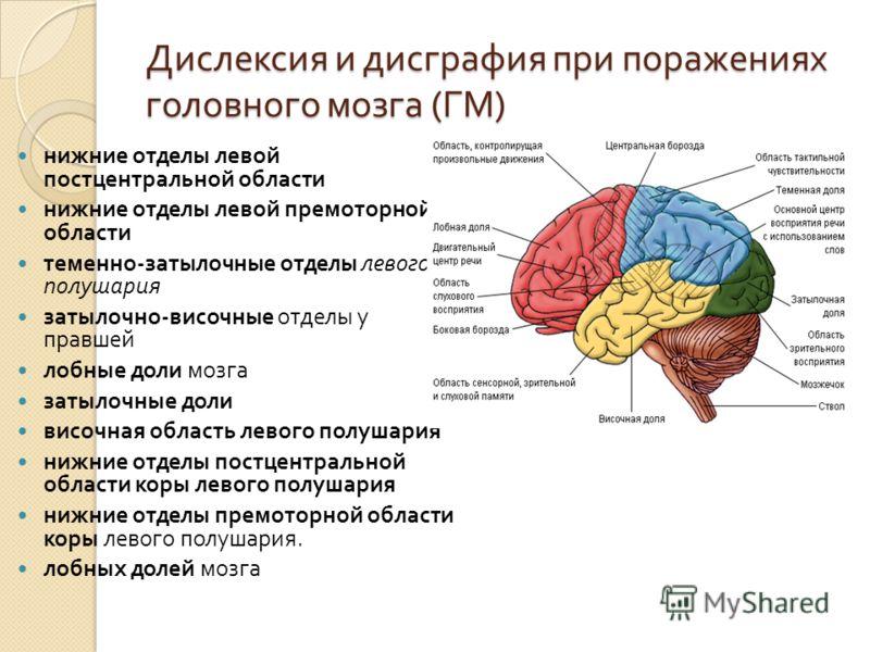 Дислексия и дисграфия при поражениях головного мозга ( ГМ ) нижние отделы левой постцентральной области нижние отделы левой премоторной области теменно - затылочные отделы левого полушария затылочно - височные отделы у правшей лобные доли мозга затыл