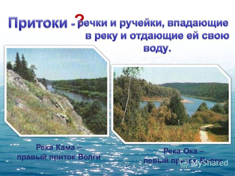 ? Река Кама – правый приток Волги Река Ока – левый приток Волги