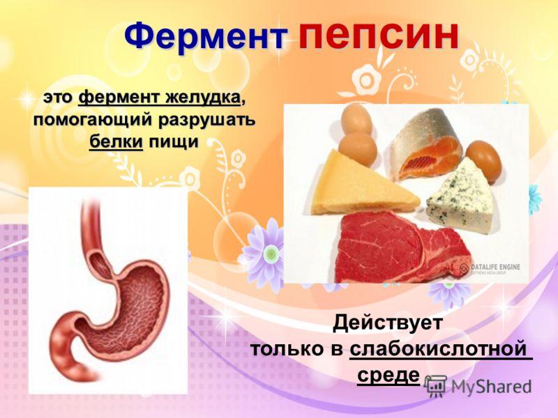 Фермент пепсин это фермент желудка, помогающий разрушать белки пищи Действует только в слабокислотной среде