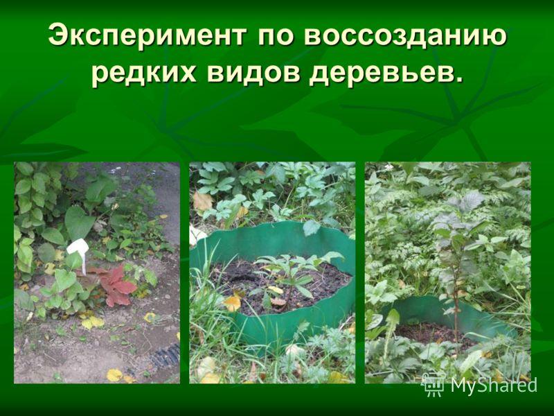 Эксперимент по воссозданию редких видов деревьев.