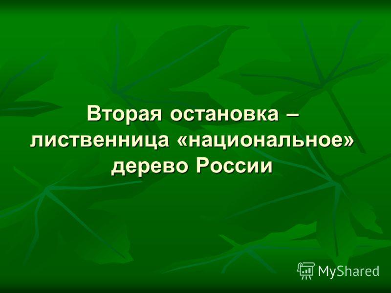 Вторая остановка – лиственница «национальное» дерево России