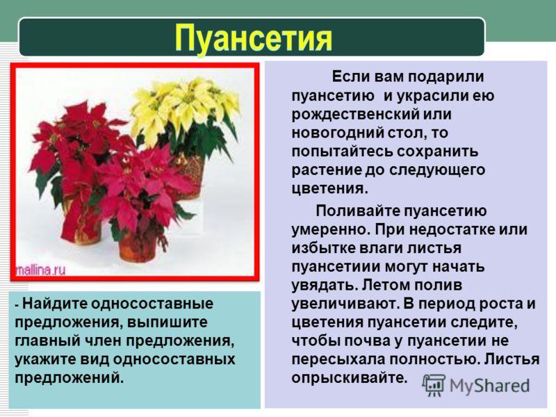 - Найдите односоставные предложения, выпишите главный член предложения, укажите вид односоставных предложений. Если вам подарили пуансетию и украсили ею рождественский или новогодний стол, то попытайтесь сохранить растение до следующего цветения. Пол