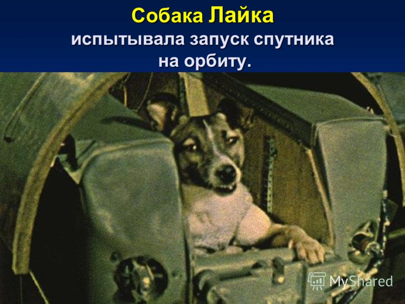 Собака Лайка испытывала запуск спутника на орбиту.
