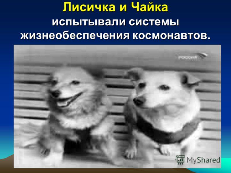 Лисичка и Чайка испытывали системы жизнеобеспечения космонавтов.