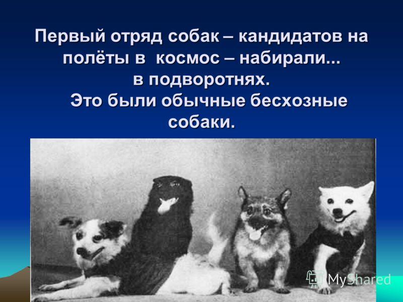 Первый отряд собак – кандидатов на полёты в космос – набирали... в подворотнях. Это были обычные бесхозные собаки.