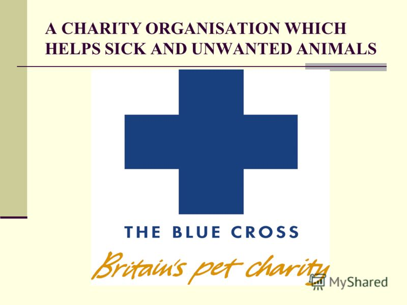 A CHARITY ORGANISATION WHICH HELPS SICK AND UNWANTED ANIMALS