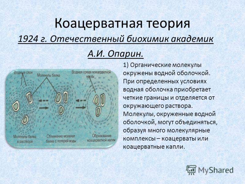 Коацерватная теория 1) Органические молекулы окружены водной оболочкой. При определенных условиях водная оболочка приобретает четкие границы и отделяется от окружающего раствора. Молекулы, окруженные водной оболочкой, могут объединяться, образуя мног