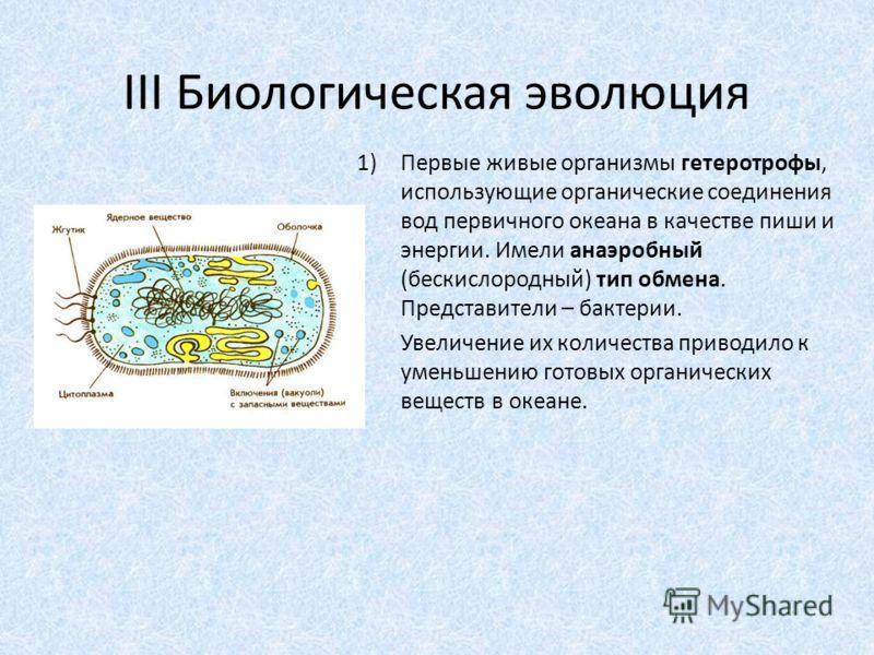 III Биологическая эволюция 1)Первые живые организмы гетеротрофы, использующие органические соединения вод первичного океана в качестве пиши и энергии. Имели анаэробный (бескислородный) тип обмена. Представители – бактерии. Увеличение их количества пр