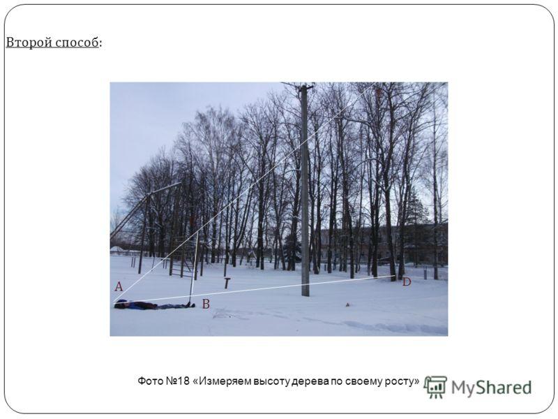 Второй способ : Фото 18 «Измеряем высоту дерева по своему росту» А В D E C