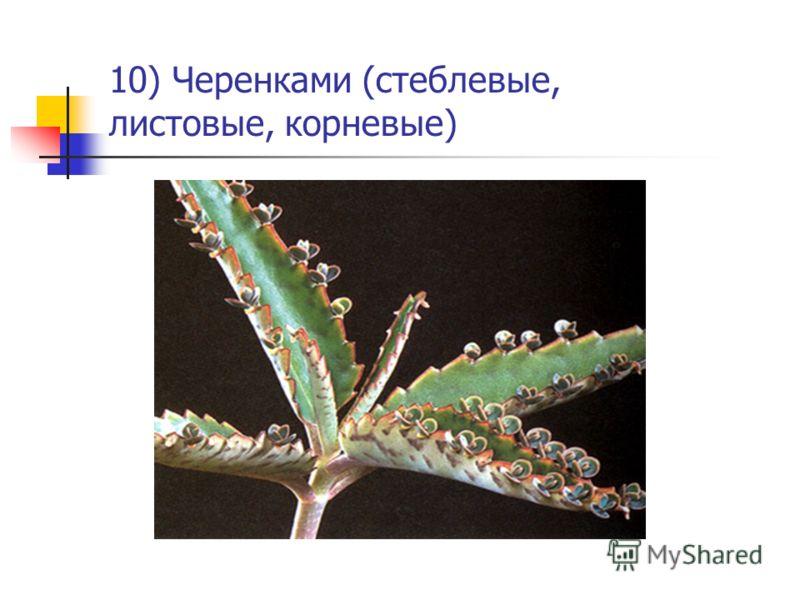 10) Черенками (стеблевые, листовые, корневые)